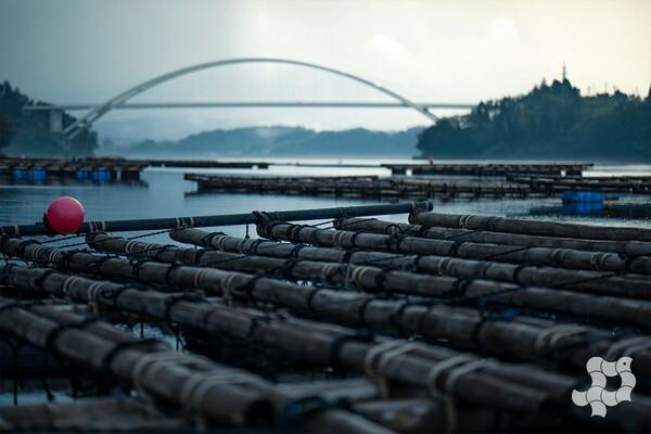 気仙沼大島大橋と筏