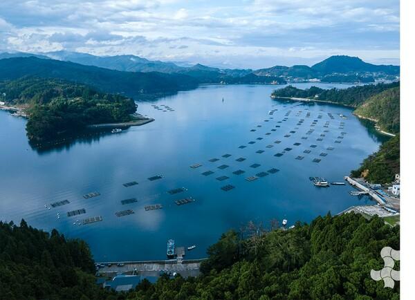海に浮かぶたくさんの筏(イカダ)