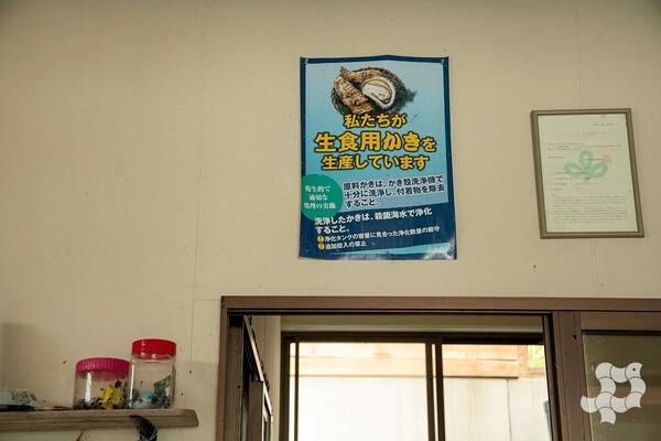 「私たちが生食用牡蠣を生産しています」と書かれたポスター