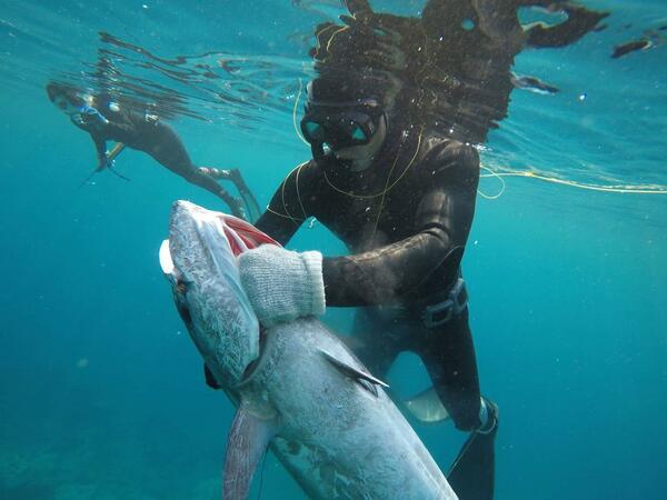 水中で大きな魚を持つ姿