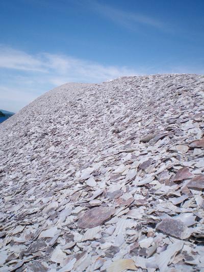 山のように積まれたホタテの貝殻