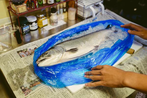 青いビニール袋を開けると、びっしりの氷の中に鮭が丸一匹。