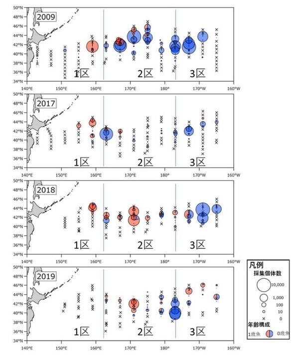 6~7月に実施したサンマ資源量直接推定調査におけるサンマの分布状況。図中の赤丸は大型の1歳魚、青丸は小型の0歳魚の割合を表す