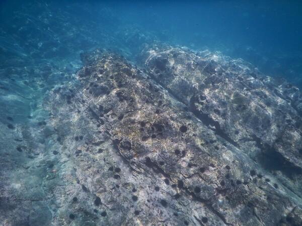 海藻がなくなりウニだらけの岩場